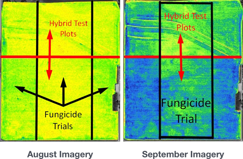 fungicide trials on hybrid test plot