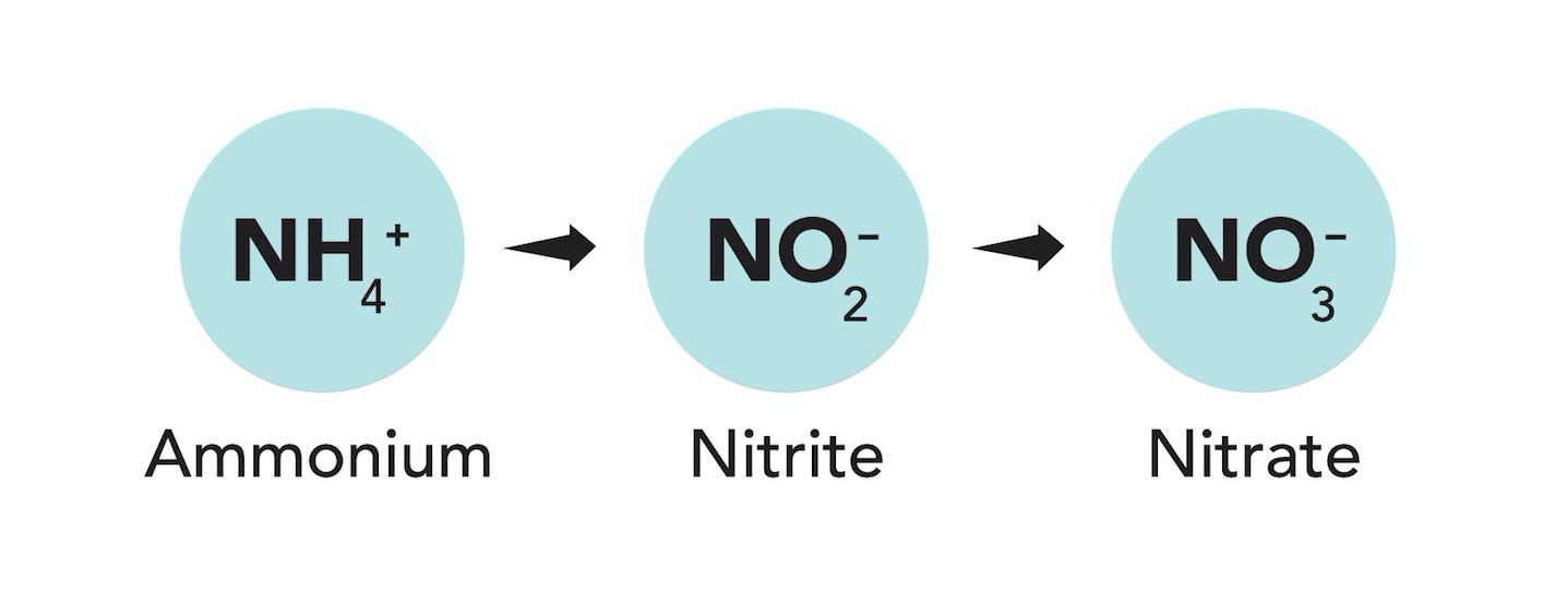 final-nitrification.png