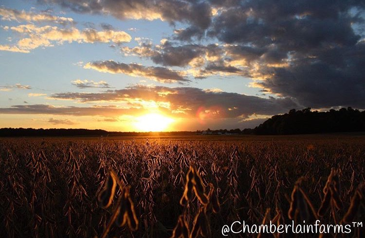 chamberlain-farms3.png